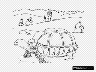 Coloring Book Desert Tortoise