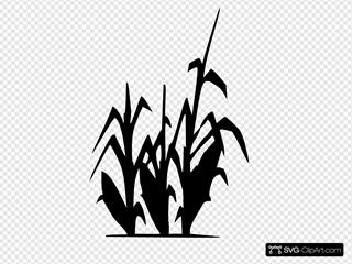 Corn Plant Silhouette