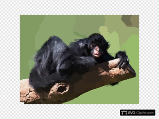 Hugging To A Tree Black Spider Monkey
