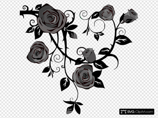 Gray Roses No Background