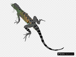 Green Black Lizard