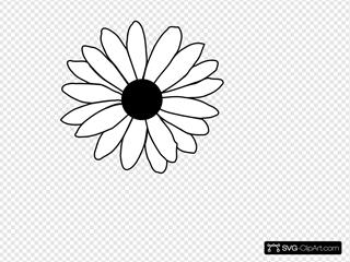 Daisy Modification