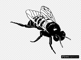 Bumble Bee SVG Clipart