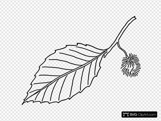 Beech Leaf Outline