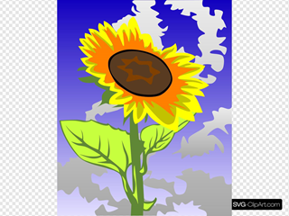 Sunflower With Sky In The Background