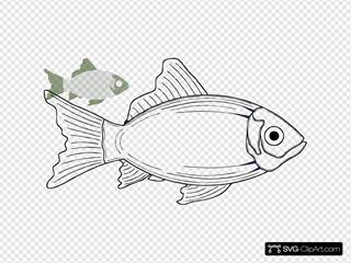 Cod Fish, White