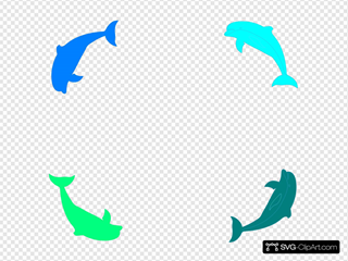 Dolphin Border