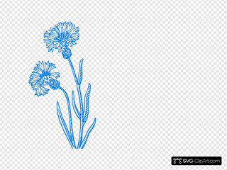 Blue Cornflower Sketch
