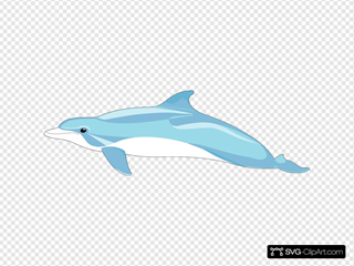 Blue And White Dolphin