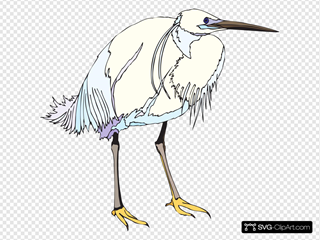 White And Blue Heron