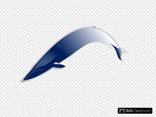 Bluewhale Md