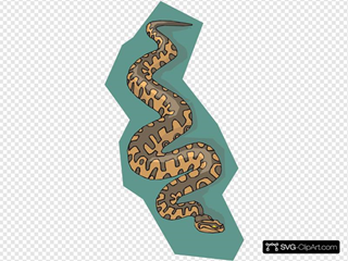 Snake With Teal Background