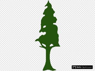 Redwood Tree Brown Green