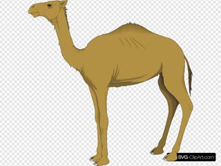 Brown Standing Camel