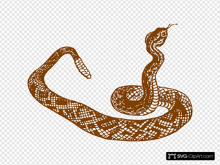 Brown Rattle Snake