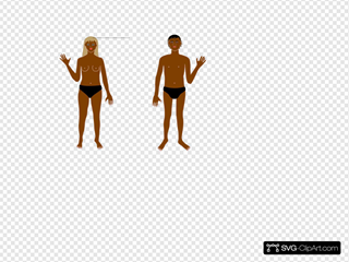Human Body B