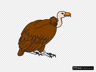 Big Brown Vulture