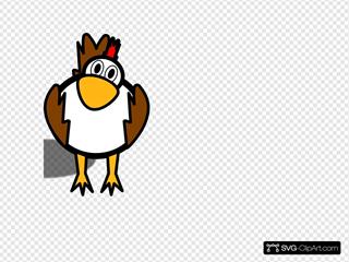 Brown  White Chicken