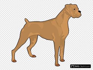 Brown Boxer
