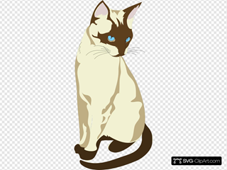 Brown And Cream Colored Cat