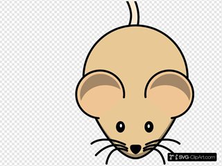 C3h Mouse Short Tail