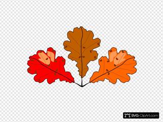 3 Oak Leaves