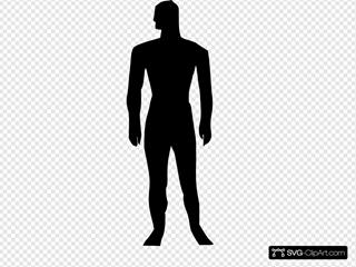 Human Body Silhouette Medical Illustration