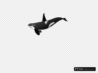 Orca SVG Clipart
