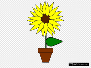 Sunflower In A Pot