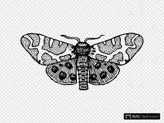 Moth Wings Open