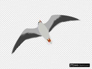Sea Gull Seagull