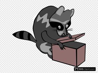 Raccoon Opening Box