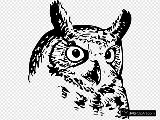 Great Owl 2