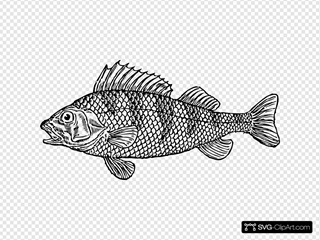 Scaly Fish