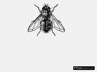 Peterm Housefly
