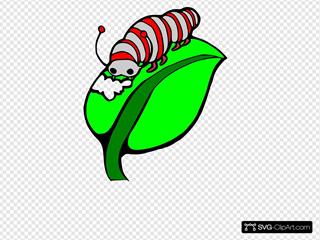 Catterpillar Colored