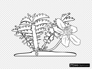 Common Silverweed Coloring Page