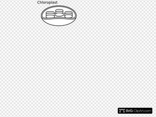 Torisan Chloroplast 2