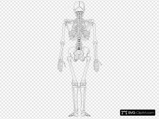 Human Skeleton Back No Text No Color