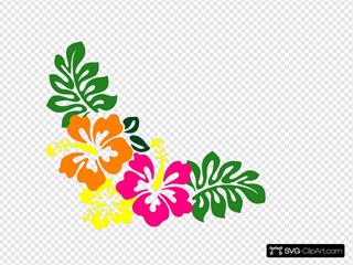 Hibiscus 20