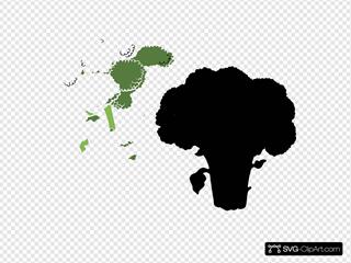 Broccoli 1 Color