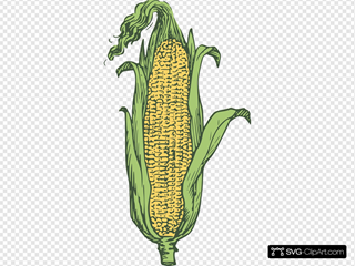 Surprising Corn Clipart For Free Fruit Names A With - Maize - Png Download  (#286618) - PinClipart