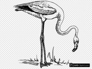 Flamingo 2 SVG Clipart