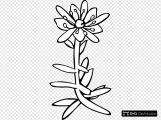 Yellow Mountain Saxifrage Coloring Page