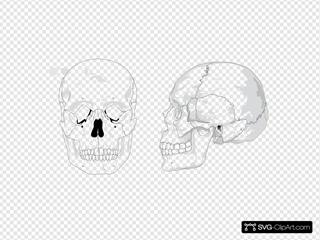 Human Skull No Text No Color
