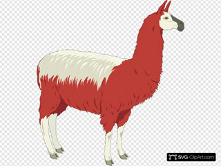 Red And White Llama