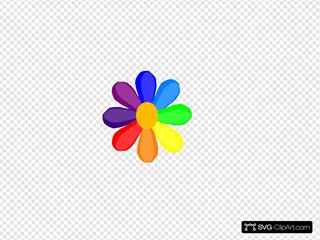 Bright Rainbow Daisy