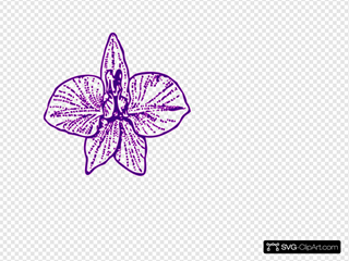 Orchid Outline Pure