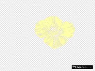 Pale Yellow Poppy