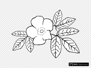 Prickly Wild Rose Coloring Page